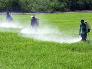 farmer spraying pesticide in paddy field.; Shutterstock ID 129570608; PO: dicembre
