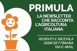Banner-Primula