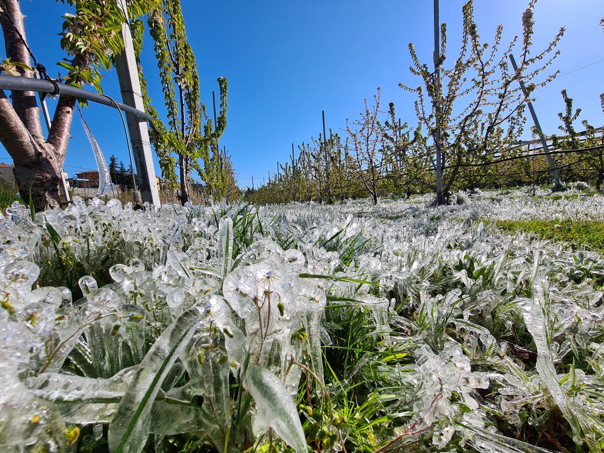Ondata di gelo stronca agricoltura al Centro Nord. Cia: danneggiato il 75%